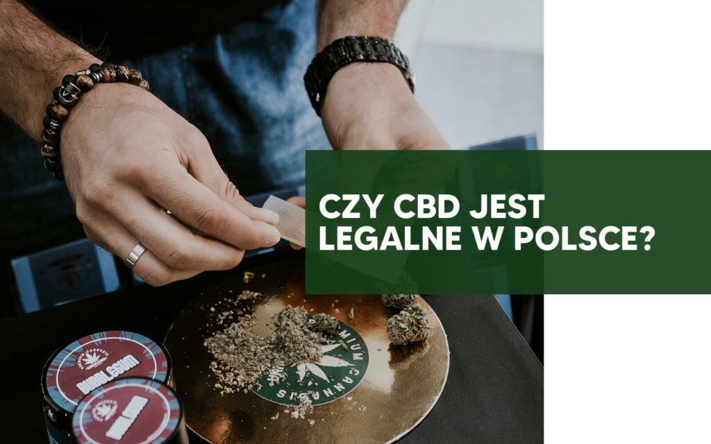 CZY CBD JEST LEGALNE W POLSCE